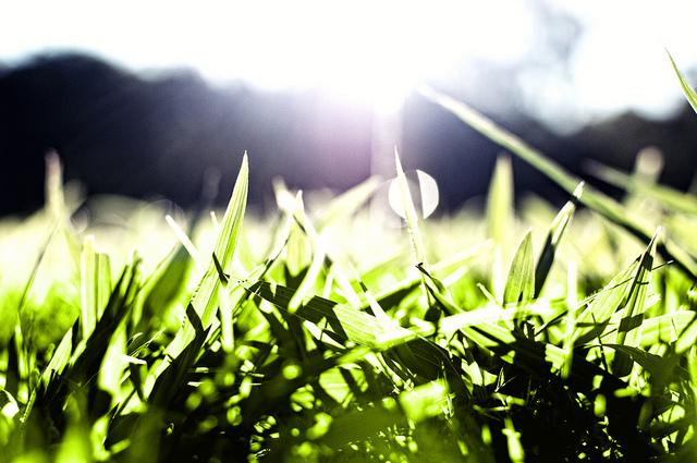 Grass 640